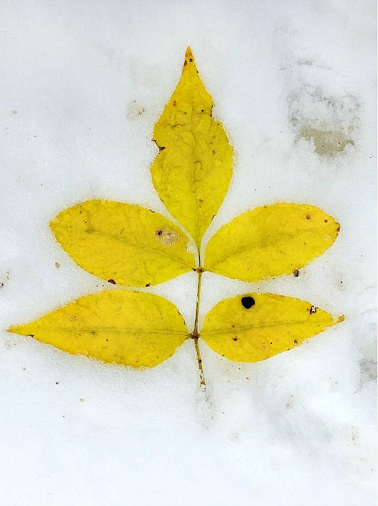 fall-snow-Canada