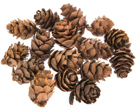 Miniature Pinecones