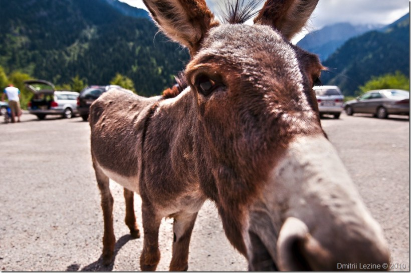 Donkey - Click to open it in my Photo Library