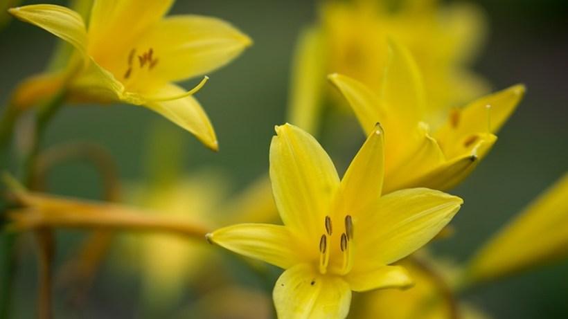 RG-Yellow1