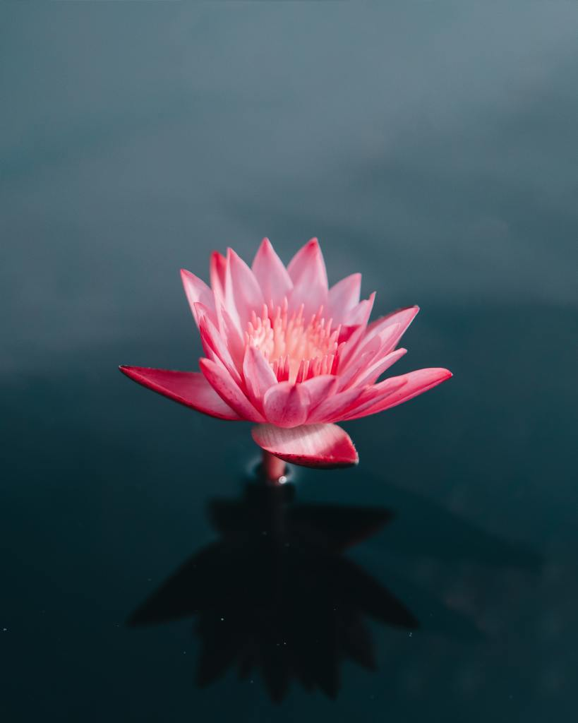 How'd I do Post Pink Flower on blue pond.