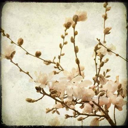Love Blooms II - 8x8 Fine Art Print