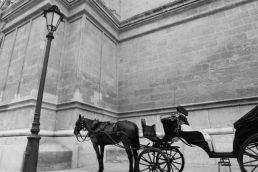 Amish Buggie Rides.