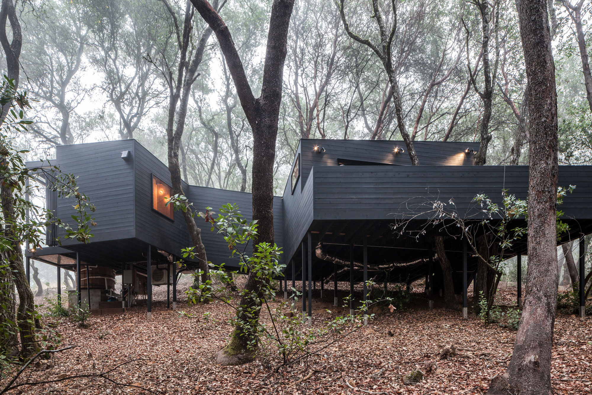 Forest House A Cluster Of Interconnected Cabins In The