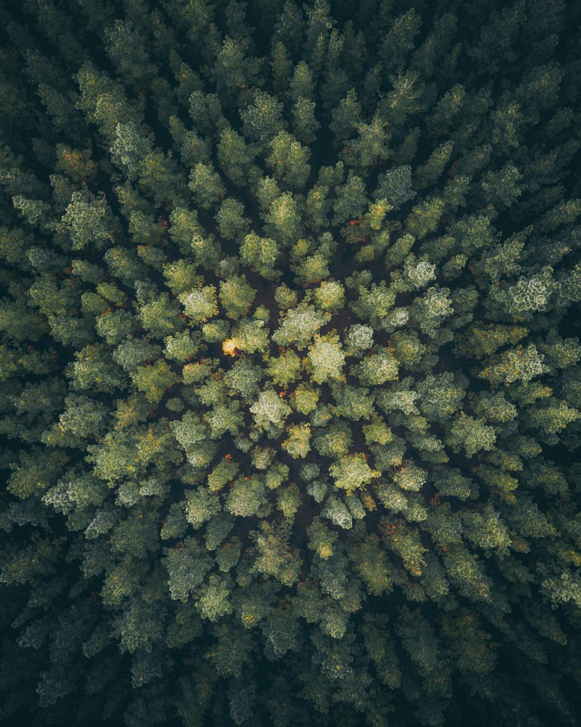 Mr Bo Drone Photography South Australia