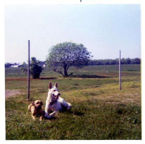Sabor and Buck