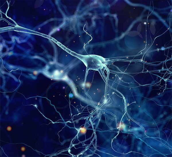 Running Triggers Birth of New Neurons in Your Brain
