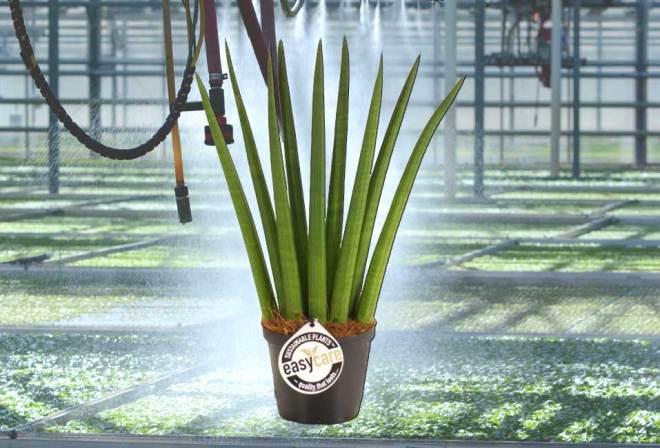 plainview-easy-care-plants-01