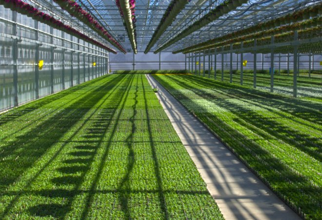 plainview-growers-plant-plugs-allamuchy-new-jersey-greenhouse