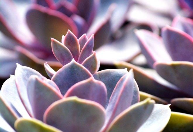 plainview-growers-succulents-plants-greenhouse-mudflower-media-web-design-01