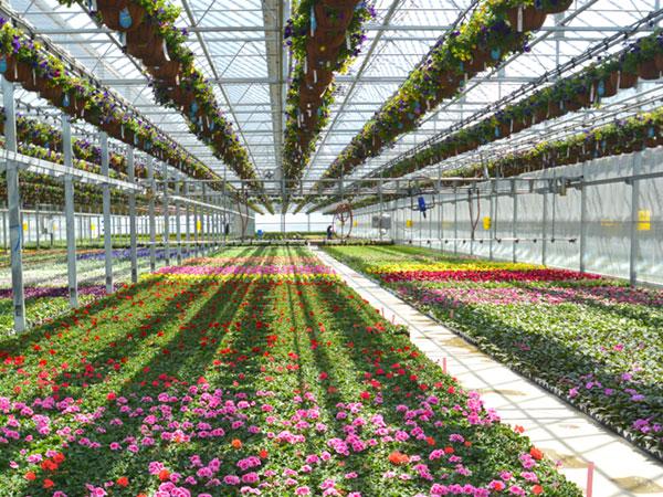 succulents-plainview-growers-600-02