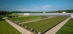 plainview-growers-allamuchy-nj-greenhouse-plants-orchids-annuals-succulents-nj-03