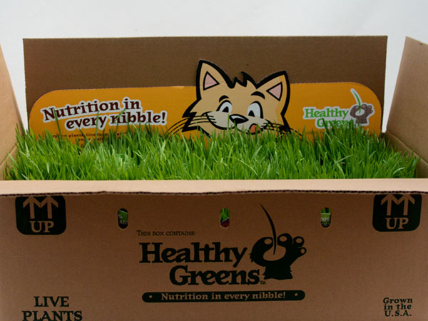plainview-growers-healthy-greens-cat-grass-pet-food-01