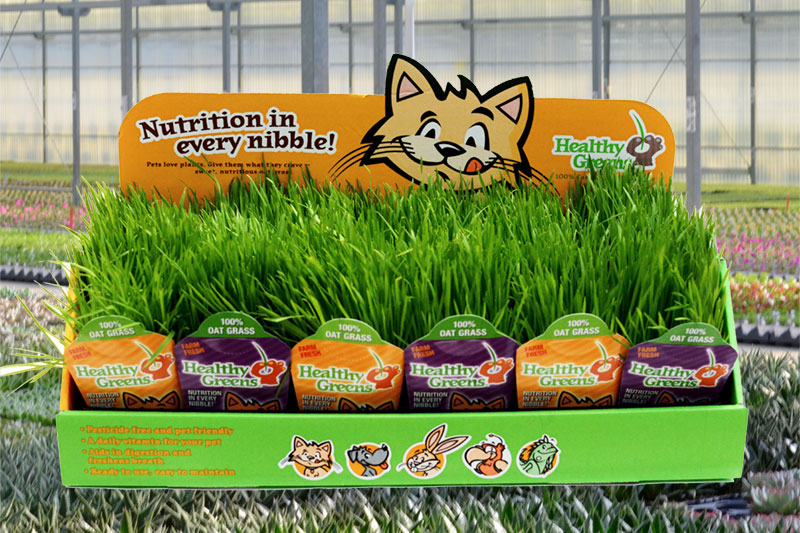 plainview-growers-healthy-greens-cat-grass-pompton-plains-new-jersey