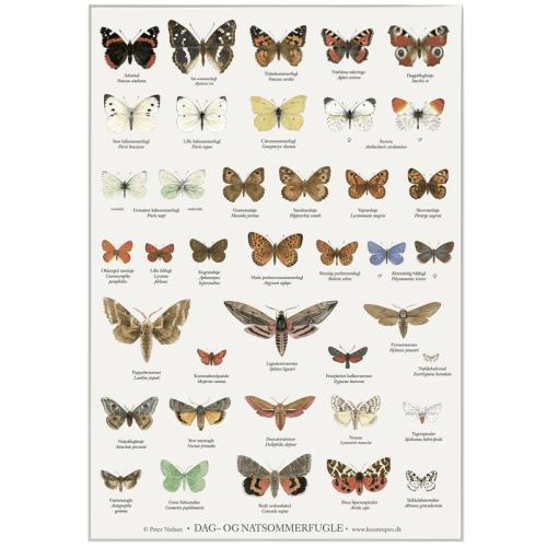 Dag og nat sommerfugle - Peter Nielsen