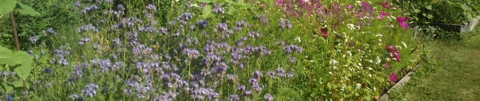 Native bee habitat restoration