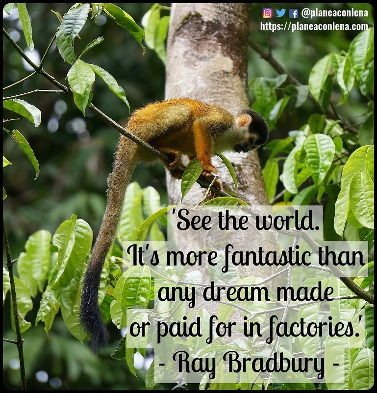 'See the world. It's more fantastic than any dream made or paid for in factories.' - Ray Bradbury