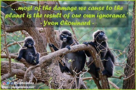'...most of the damage we cause to the planet is the result of our own ignorance.' - Yvon Chouinard