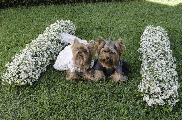 Roupinhas de casamento para cachorros: vestido de noiva e smoking de noivo. Foto: Marquesa Shop.