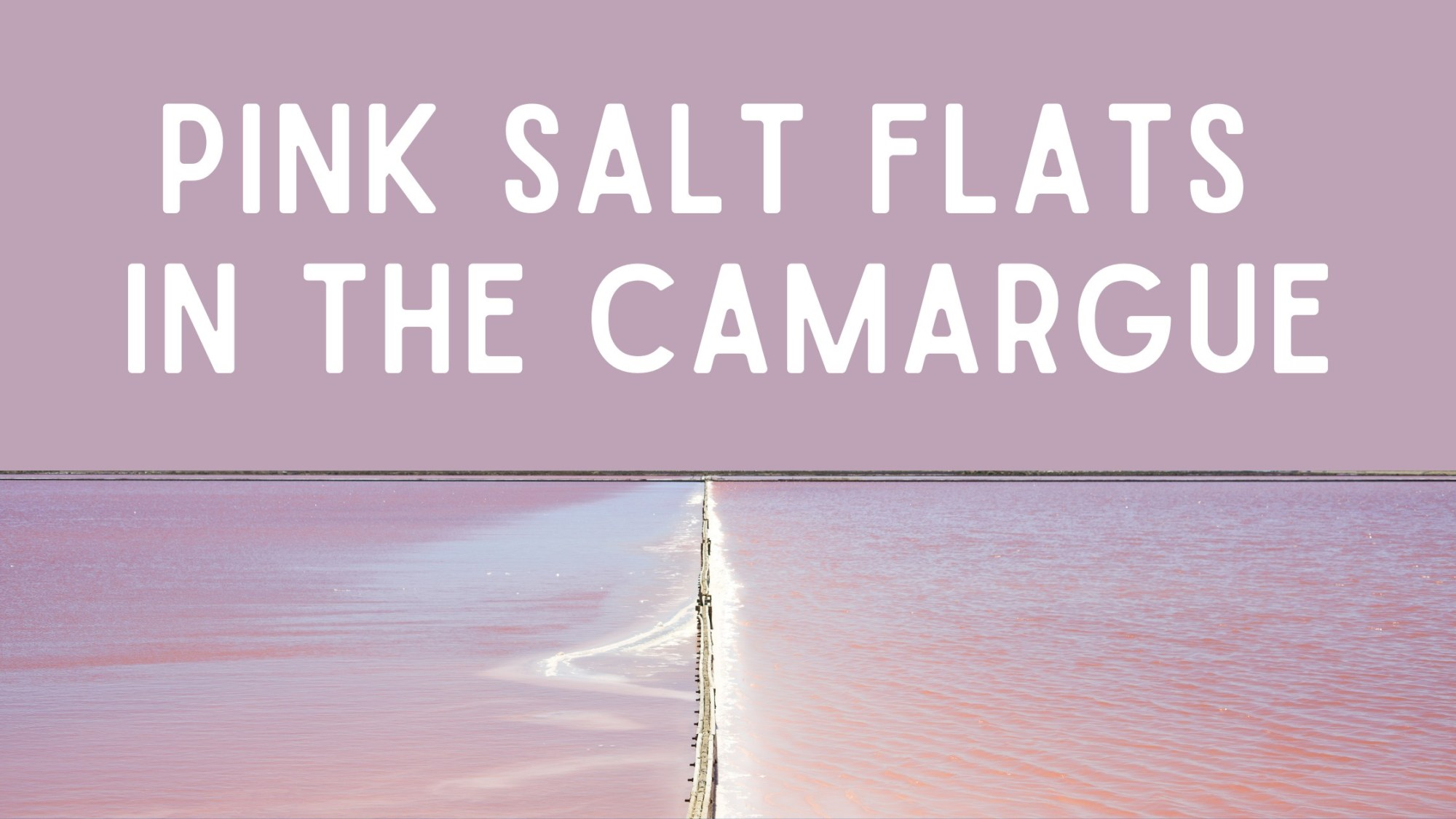 pink salt flats in the camargue region of france