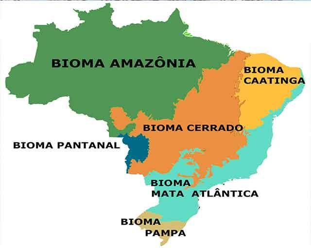 Resultado de imagem para biomas