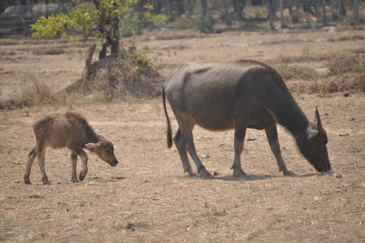 Reconversion d'une carnivore : passer à un régime flexitarien