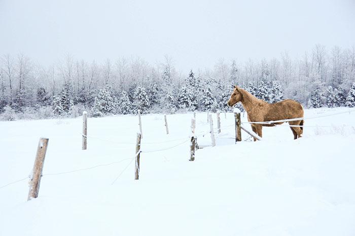 Cheval dans la neige 2