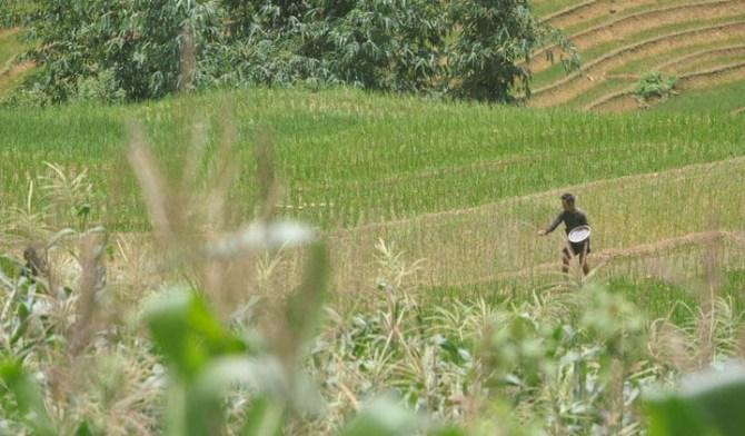Agriculture durable : rizières