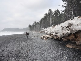Forêt olympique seattle plage 2