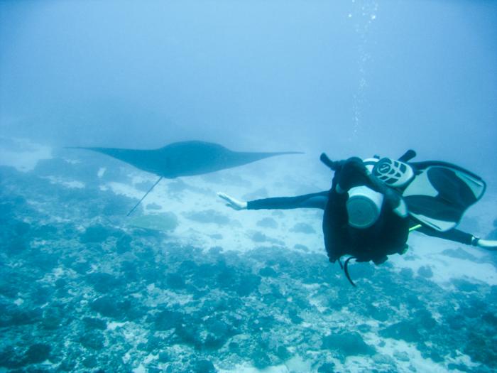 retour de voyage : plongée