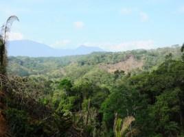 Palomino déforestation