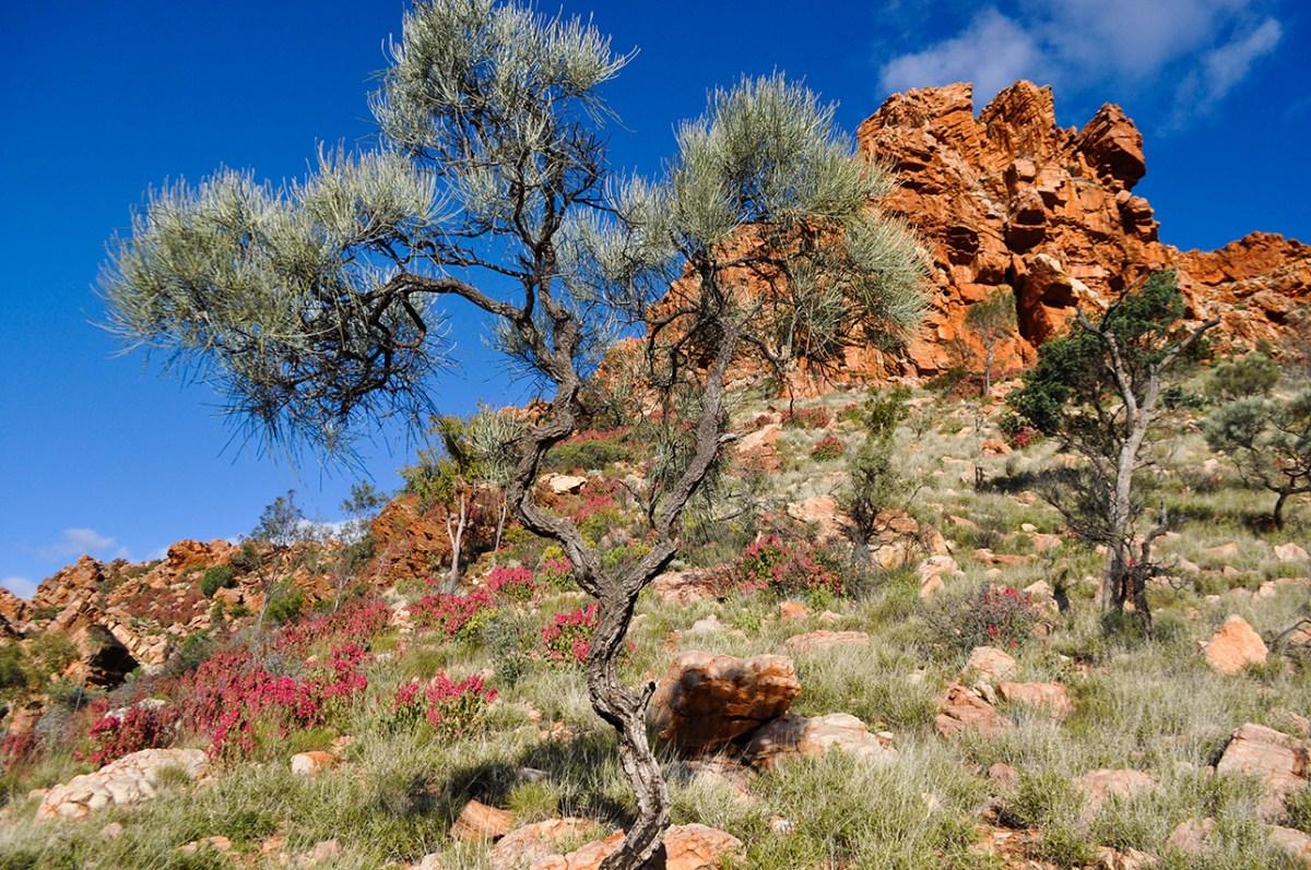 Alice Springs_E (16)