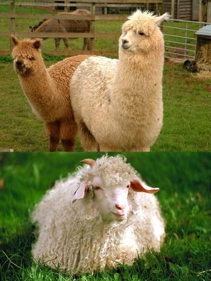 fibres-animales
