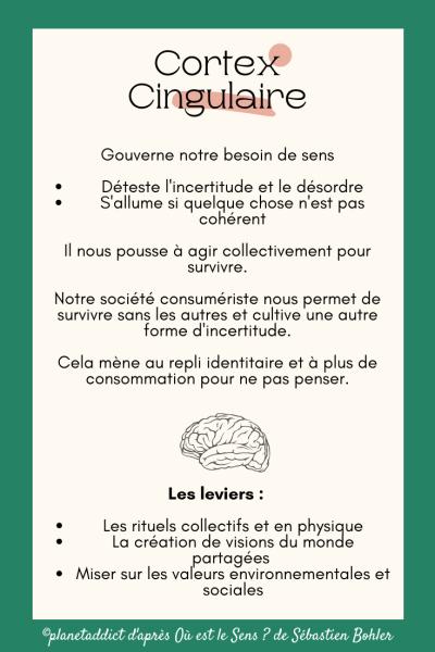 Cortex-Cingulaire