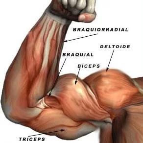 Exemplo de Treino de Bíceps para Iniciantes