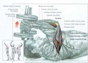 Tríceps Testa com Halteres