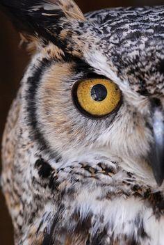 Olho de coruja Xamã: Sabedoria e Intuição