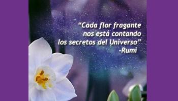 Frases De Carlos Castaneda Reflexiones Sobre La