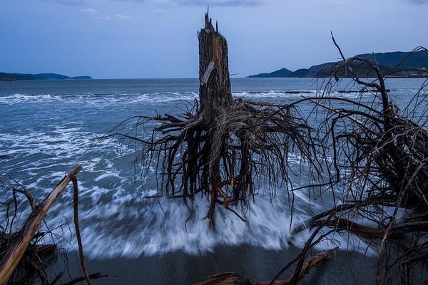 Japonia potsunami Fot.Daniel Berehulak