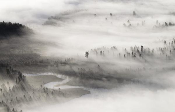 Aerial wildscape