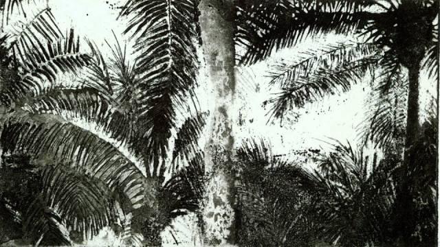 Szczalba palmy, wklęsłodruk, 2013