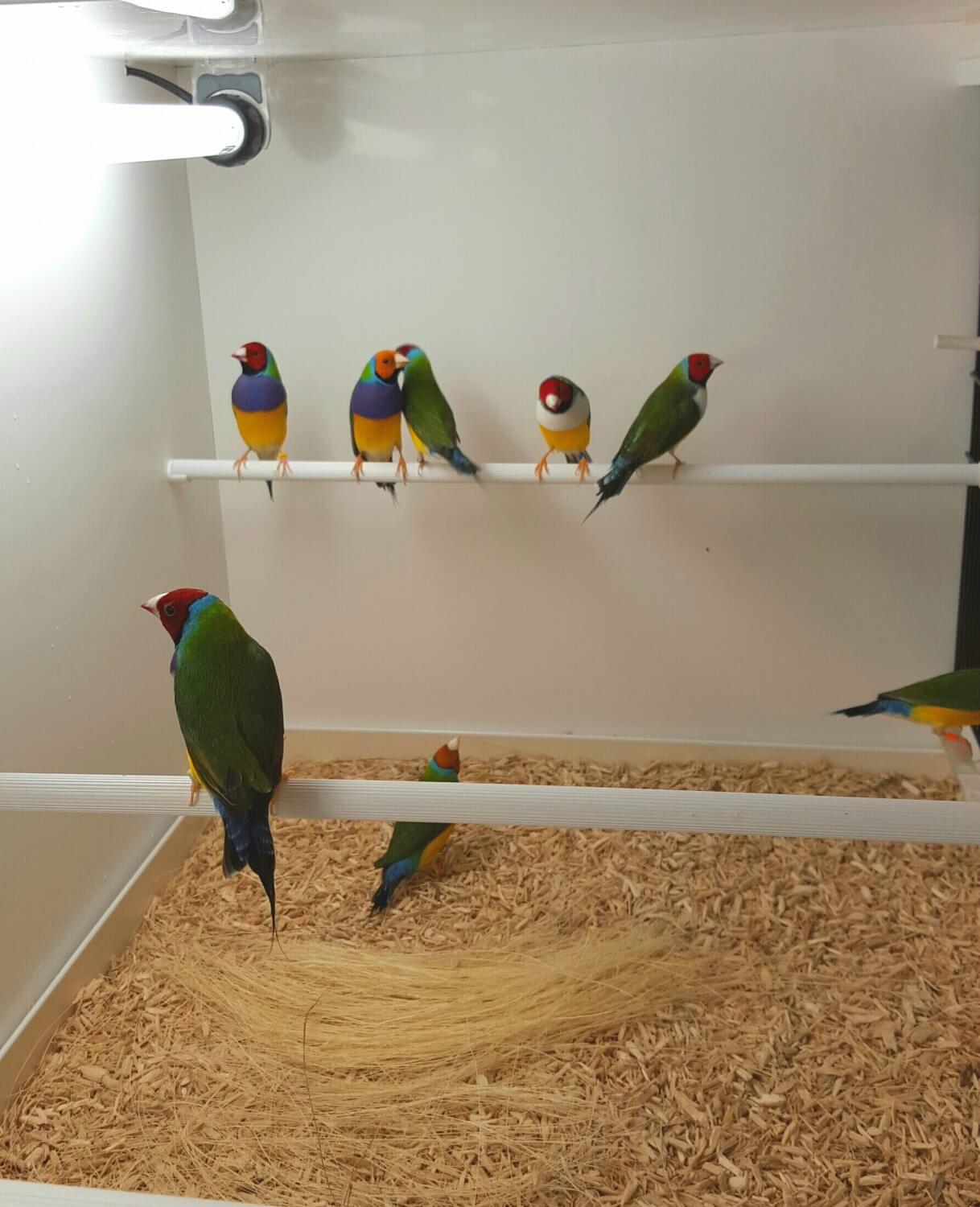Part 2 Gouldian Finch Housing Planet Aviary