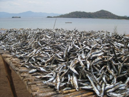 The local catch drying in the sun
