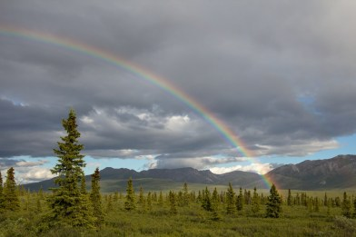 Rainbow in the Alaskan tundra