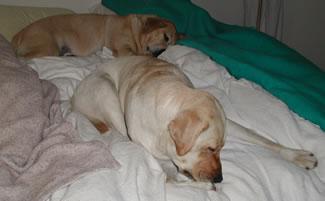 Zoey and Jasmine