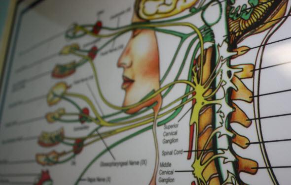 functional neurology chiropractic