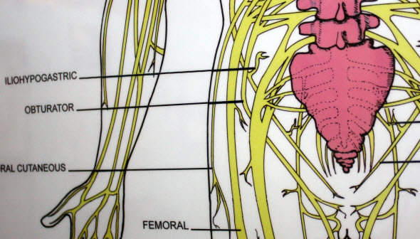 obturator nerve lumbar spine