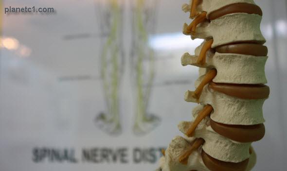 spinal nerve distribution lumbar