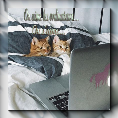 chats-on-s-aime-2