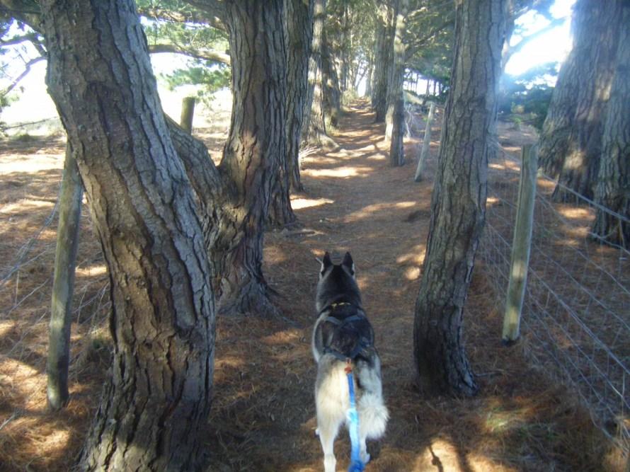 husky randonnée
